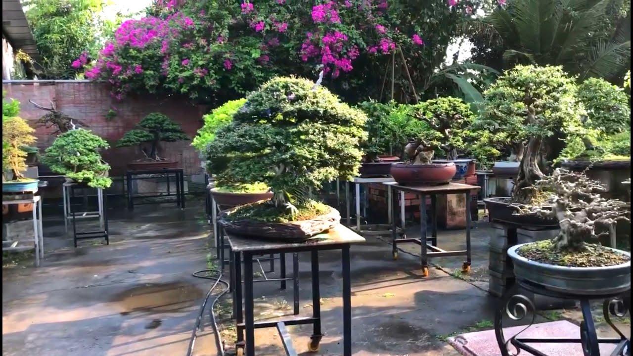 Toàn cảnh vườn Bonsai của anh Huỳnh Minh Toàn, Vĩnh Long