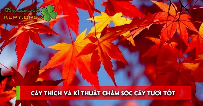 cay-thich-va-ki-thuat-cham-soc-cay-tuoi-tot