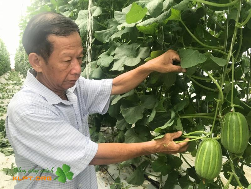 nhung-tho-thu-phan-chuyen-nghiep-1-klpt