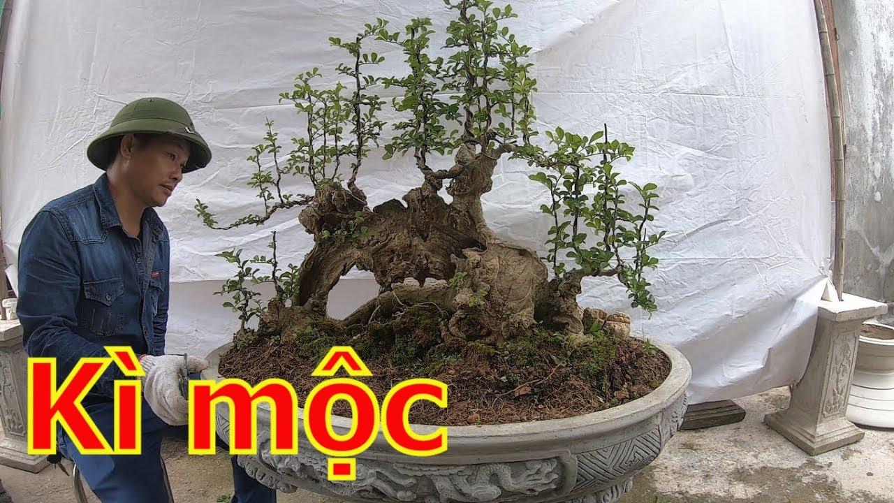 ✅Báo giá cây cảnh đẹp huyền ảo-cây cảnh bonsai đẹp✔️BShp(57-Mr.Đại 0967828345)