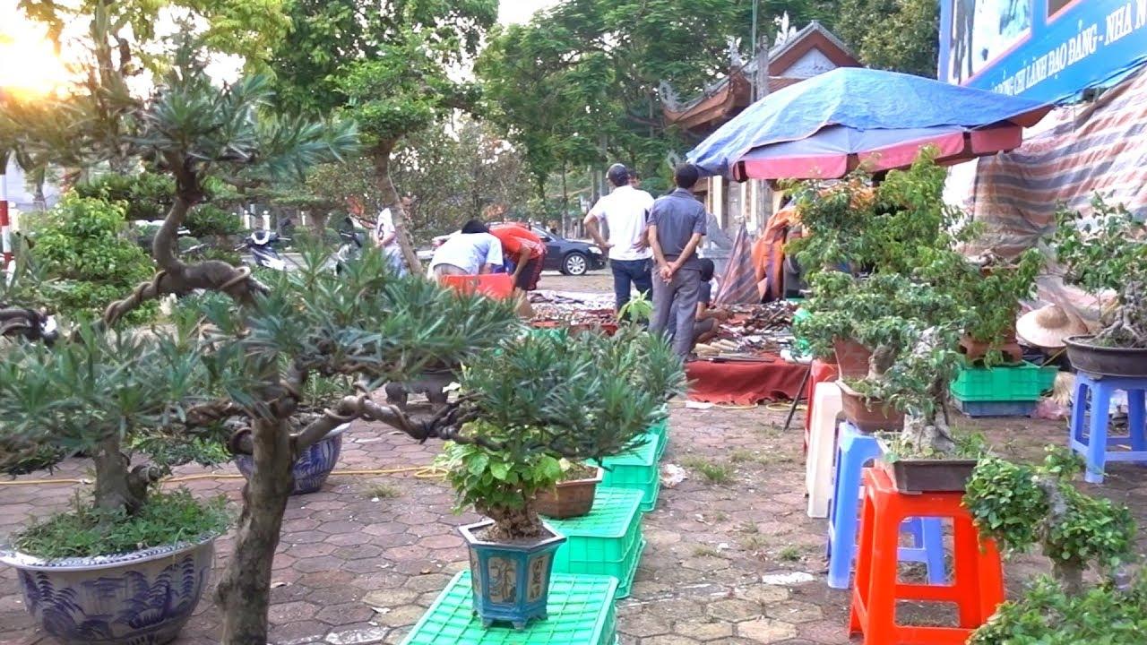 Báo giá loạt cây từ Bonsai đến Khủng RẺ ở ngoài trển lãm CC Thạch Thất, bonsai market in Thach That