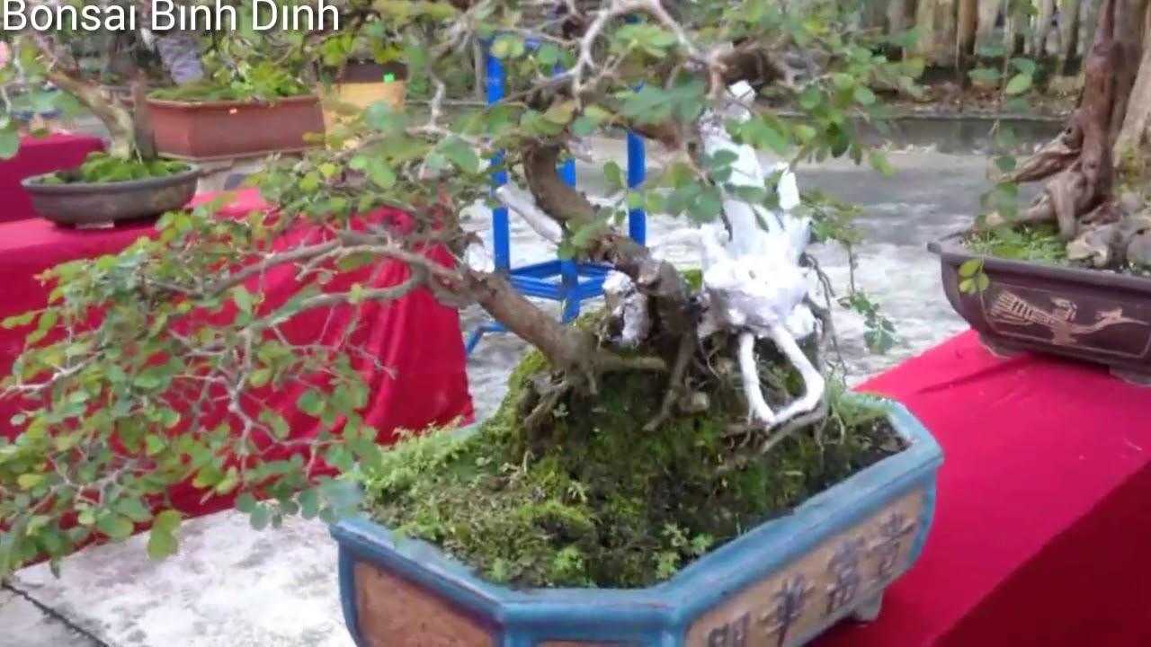 Bonsai mini vẻ đẹp mê hồn - Bonsai Binh Dinh