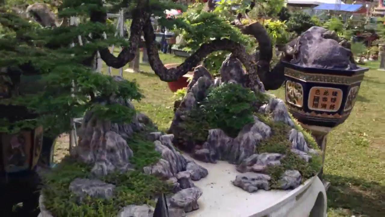 Bonsai tree | Ai cũng khoái nhìn cây này