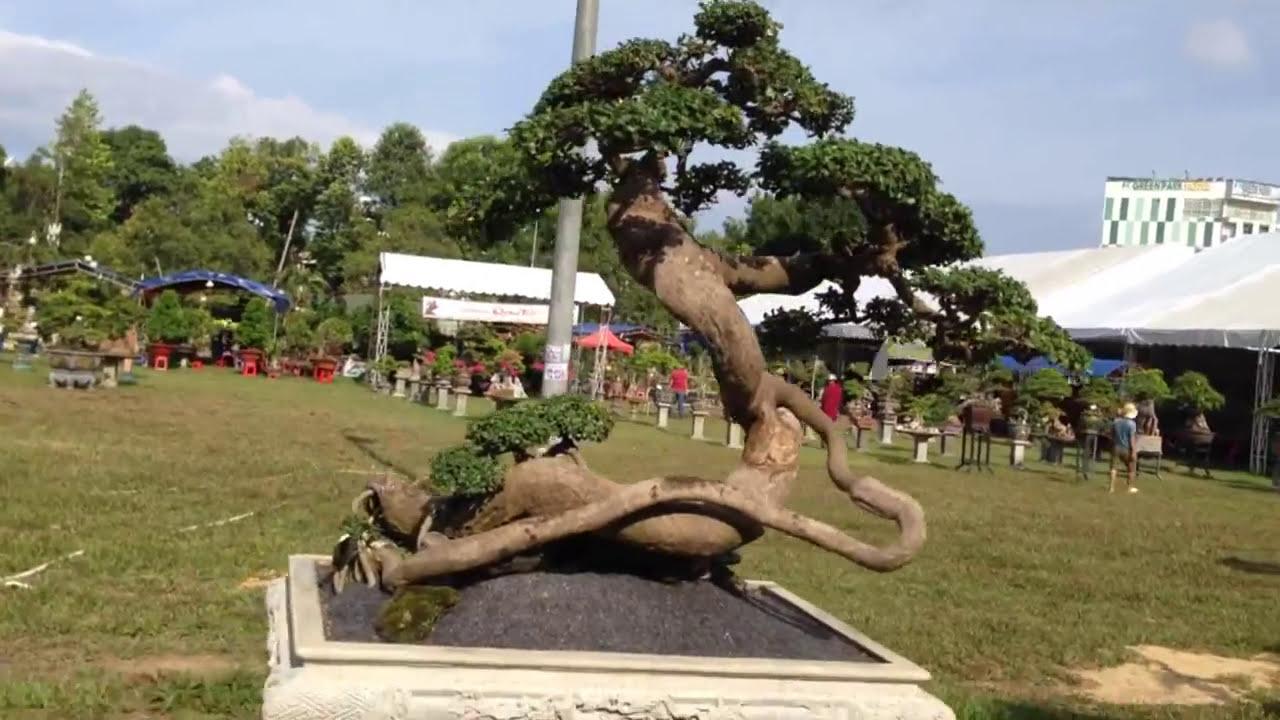 Bonsai tree - Tác  phẩm dúi khá ấn tượng - BONSAI BINH DINH