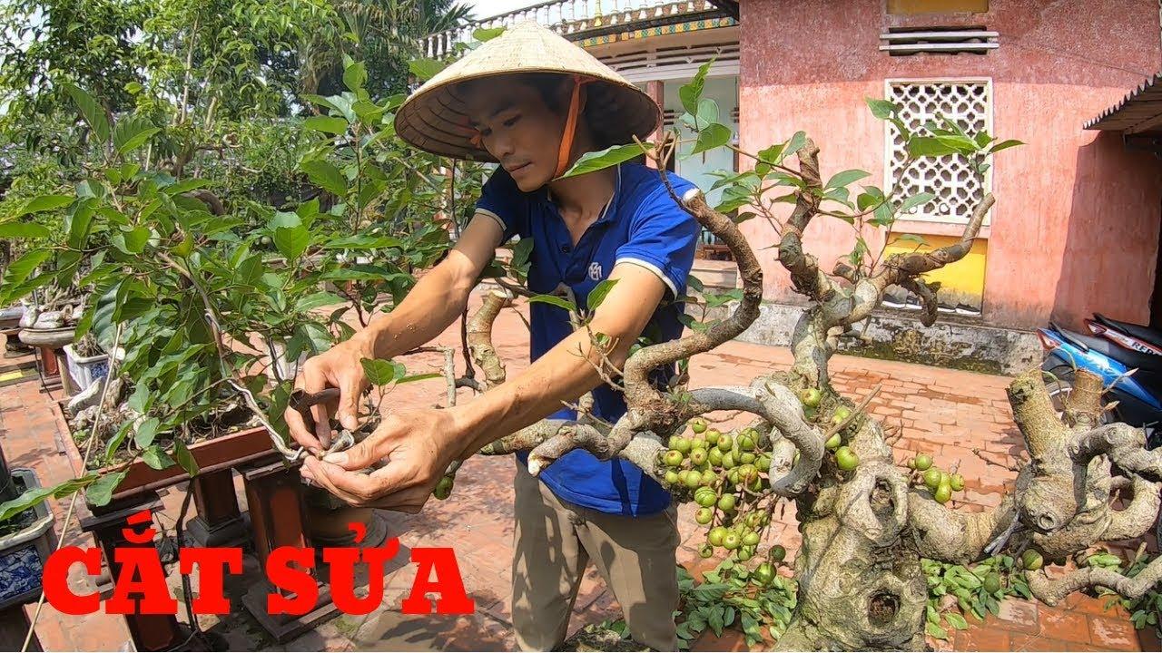 BonsaiHP/Làm tay cành cây sung giai đoạn tiếp theo và lưu ý