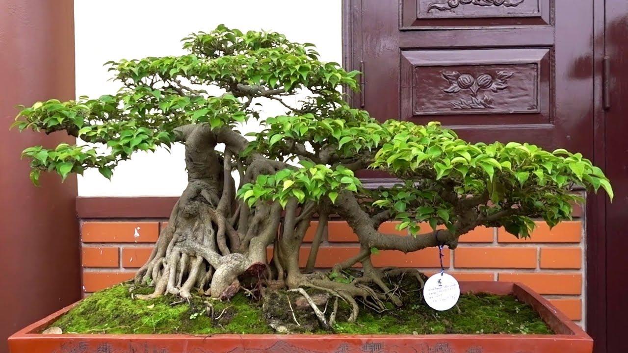 Các em gái nhật, gái quê làm mê mẩn lòng người - Japanese bonsai in Vietnam