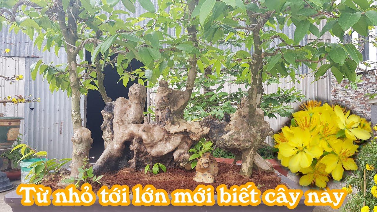 Cặp mai táng thiên nhiên giá rẻ của anh Tâm ở Cao Lãnh Đồng Tháp 0901068639