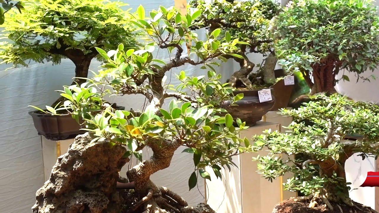 Cây trưng bày và tiểu cảnh đẹp lung linh giá hợp lý - selling beautiful bonsai trees