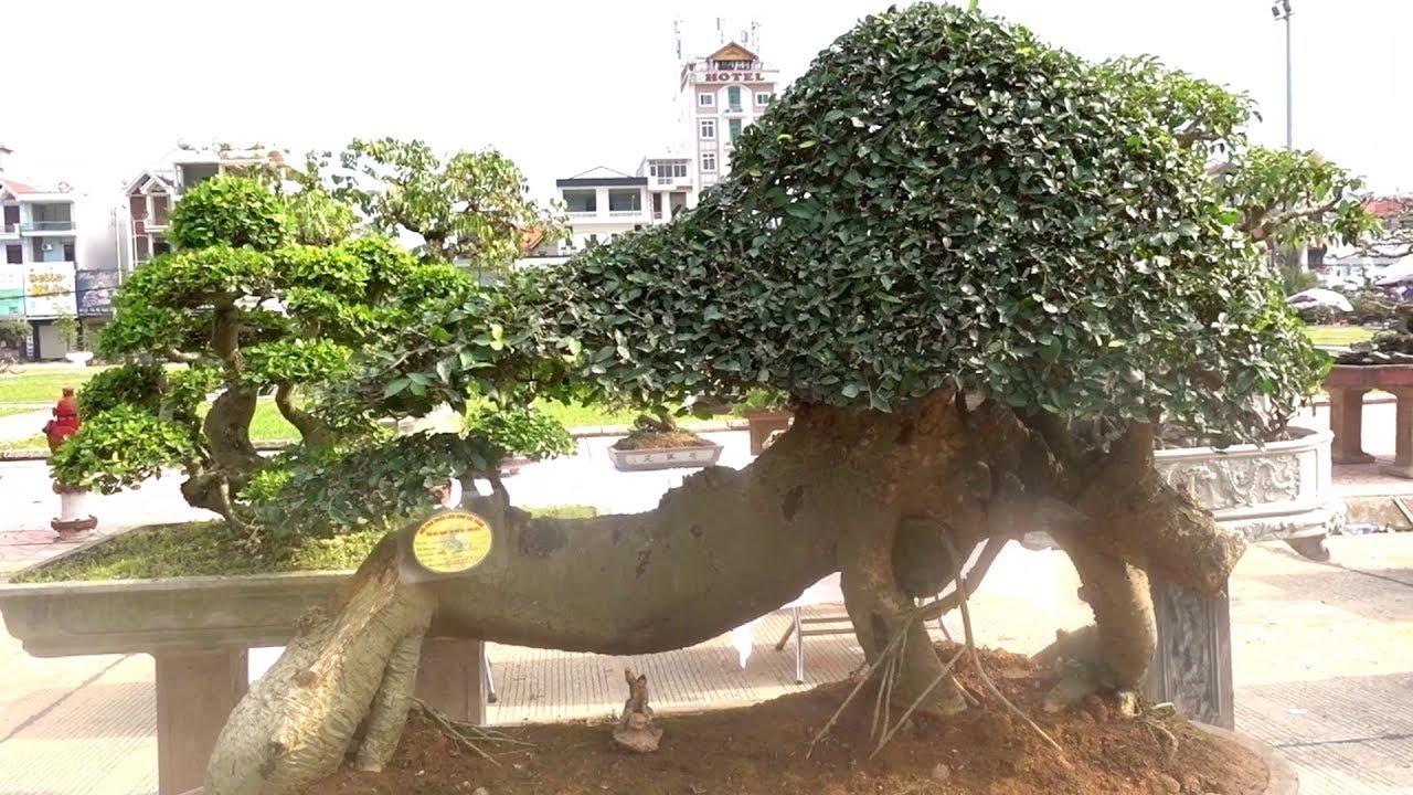 Chọn lọc những cây duối quái, lạ nhất triển lãm - strange shapes bonsai and beautiful bonsai