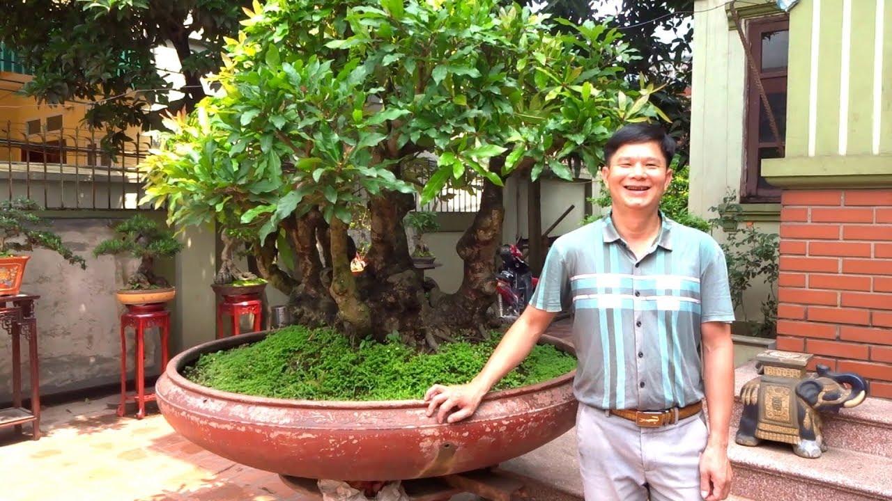 Chủ xưởng thép rất mê cây cảnh - beautiful bonsai in Mr Hop's house