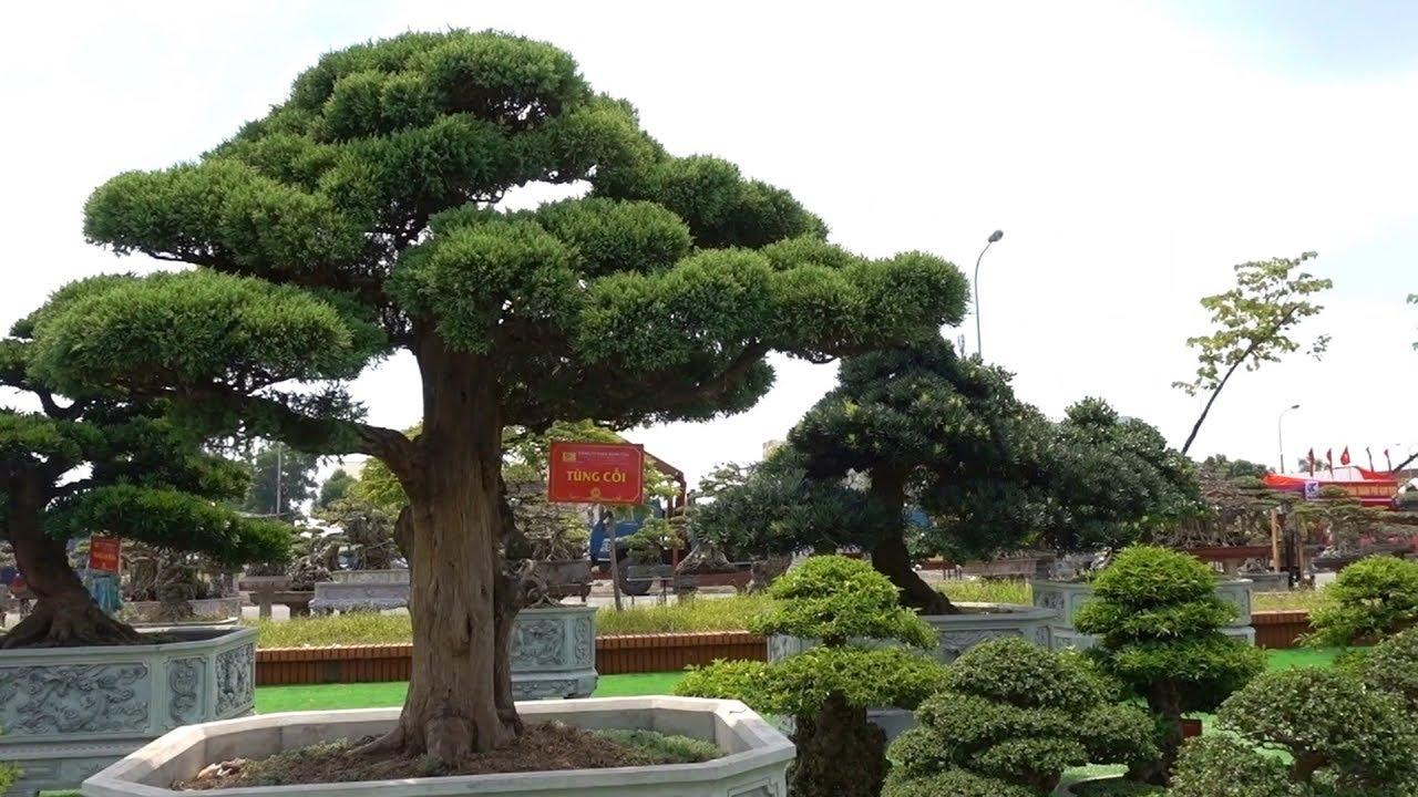 Đã mắt trước những cây được giải vàng châu Á Thái Bình Dương - bonsai trees won the gold medal