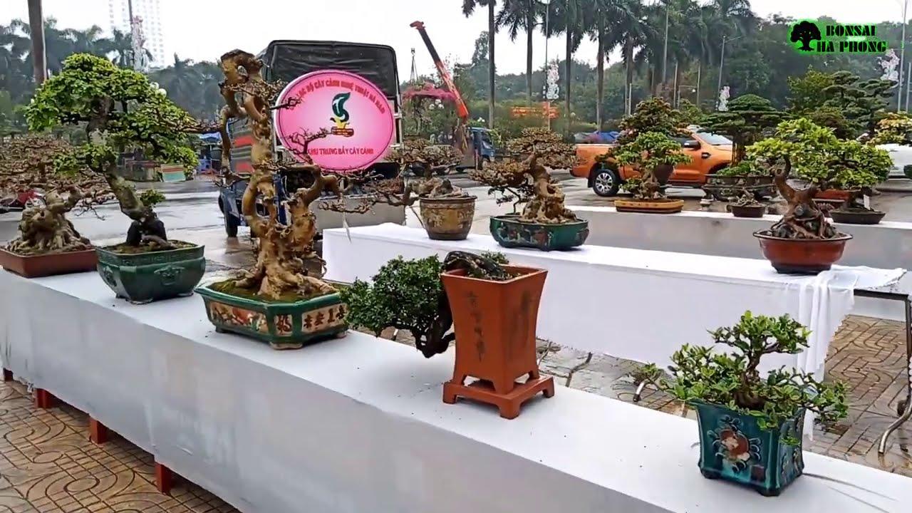 ✅Dàn cây cảnh bonsai khu để bàn ở hội chợ Hà Nam khá đẹp✔️BShp