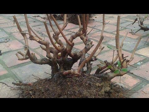 Đi rừng: Tập 3 - Phân loại Sim rừng khai thác