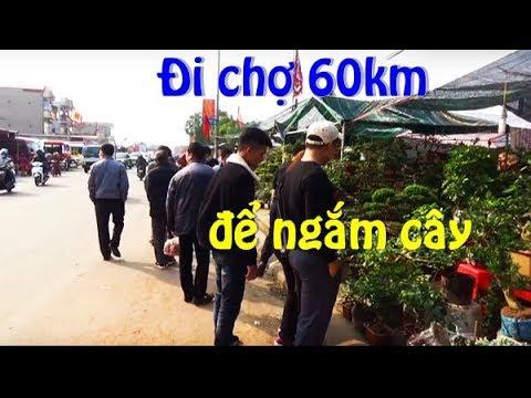 Đội rét vượt 60 km để đi chợ , không mua cũng không bán, chỉ để ngắm cây cảnh.