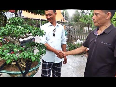 Giao dịch thành công bonsai Nam Điền giá cũng hợp lí