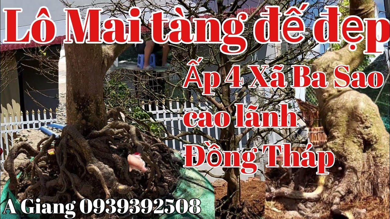 Giao lưu lô mai tàng đế đẹp gặp A Giang 0939392508,, Đồng Tháp ngày 20/7.