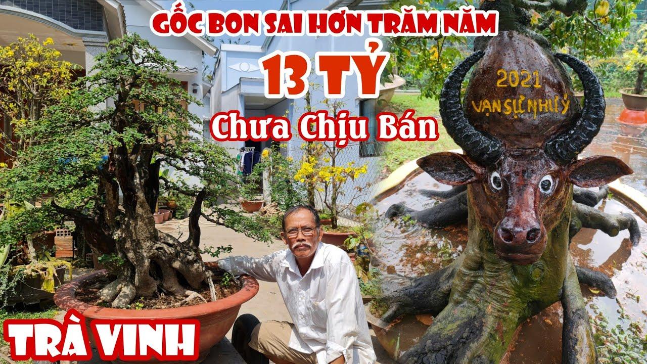Gốc Bonsai giá 13 Tỷ bất ngờ xuất hiện ở Trà Vinh 0888282567