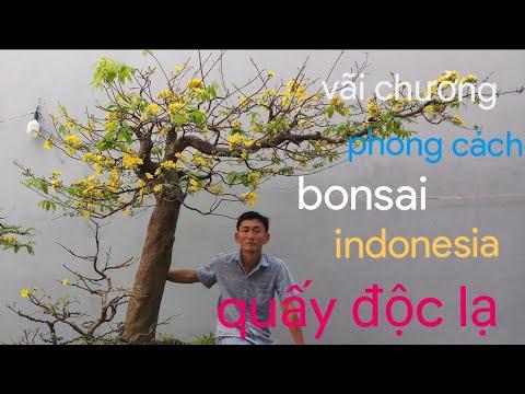 Hải Vũ làm tay cành bonsai cho cây mai bay || quấy độc lạ