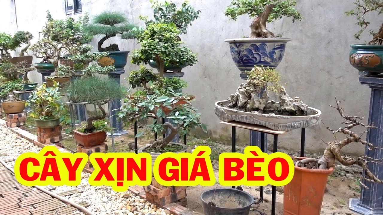 Hàng mới về đẹp không tì vết, giảm giá nhiều cây đẹp - beautiful bonsai trees
