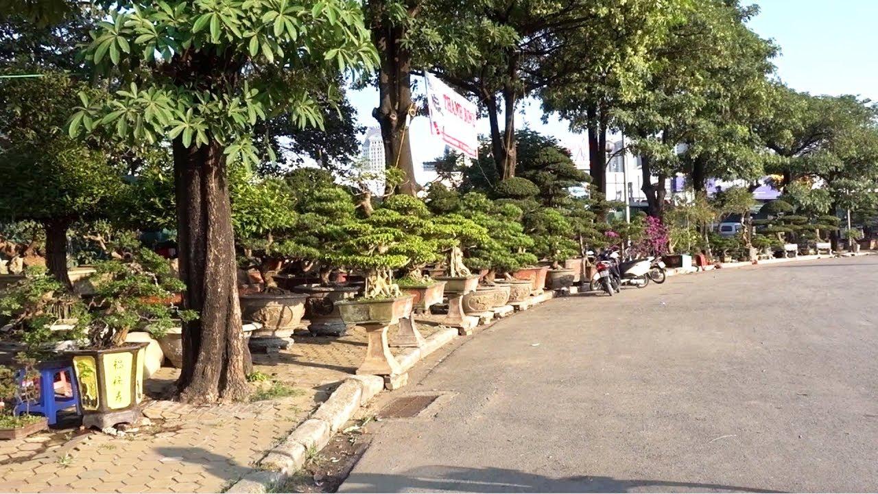 Hỏi giá cây cảnh tại hội chợ Mỹ Đình - Hà Nội, bể đá đẹp - Price of bonsai tree in My Dinh, Ha Noi