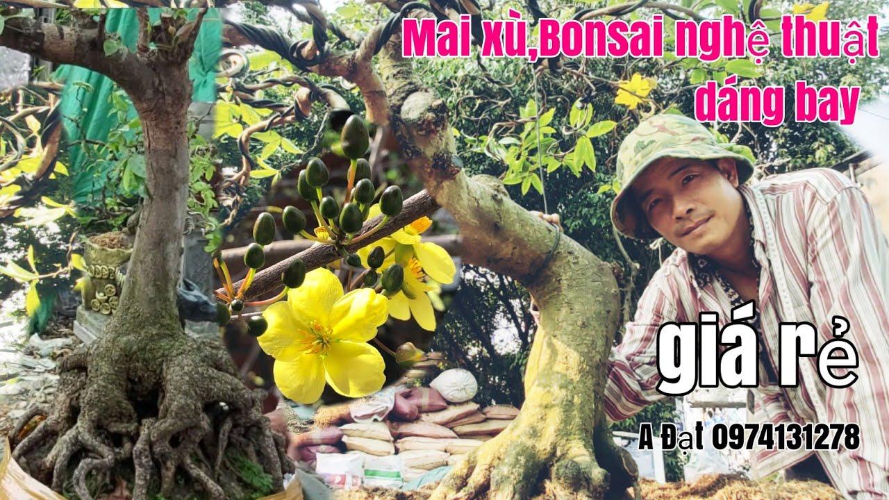 Mai Bonsai dáng bay,Dão lá rai nghệ thuật , xù củ đặc giá rẻ gặp A Đạt 0974131278 HCM