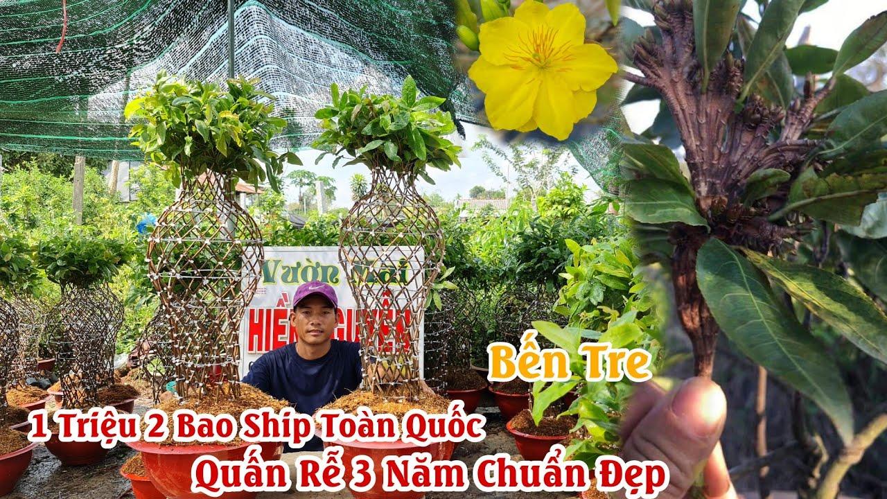 """Mai Lục Bình cách chơi chưa bao giờ hết """"HOT"""" ở Việt Nam 0376640293"""