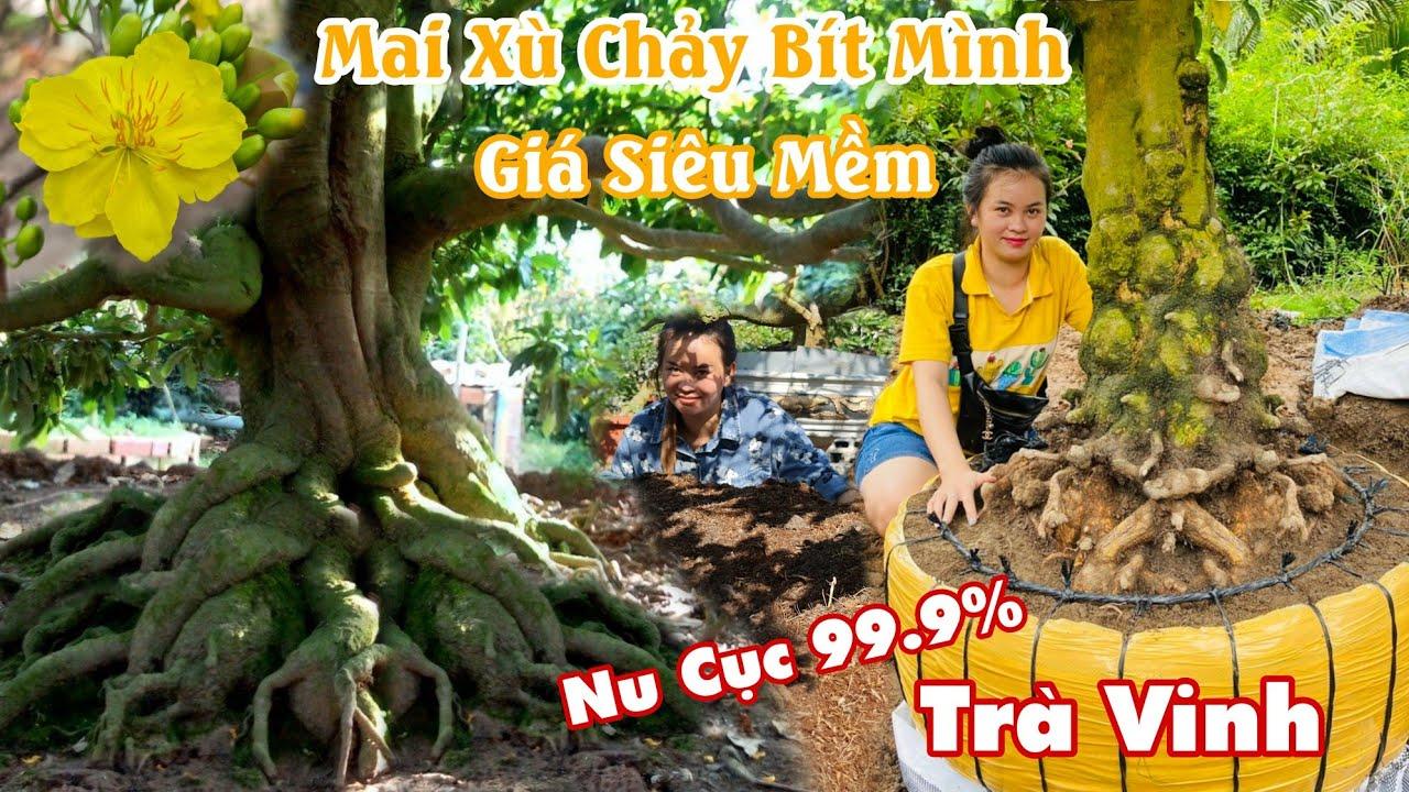 Mai XÙ CHẢY NU CỤC BÍT MÌNH 99% giá mềm phao tại Trà Vinh 0982003090