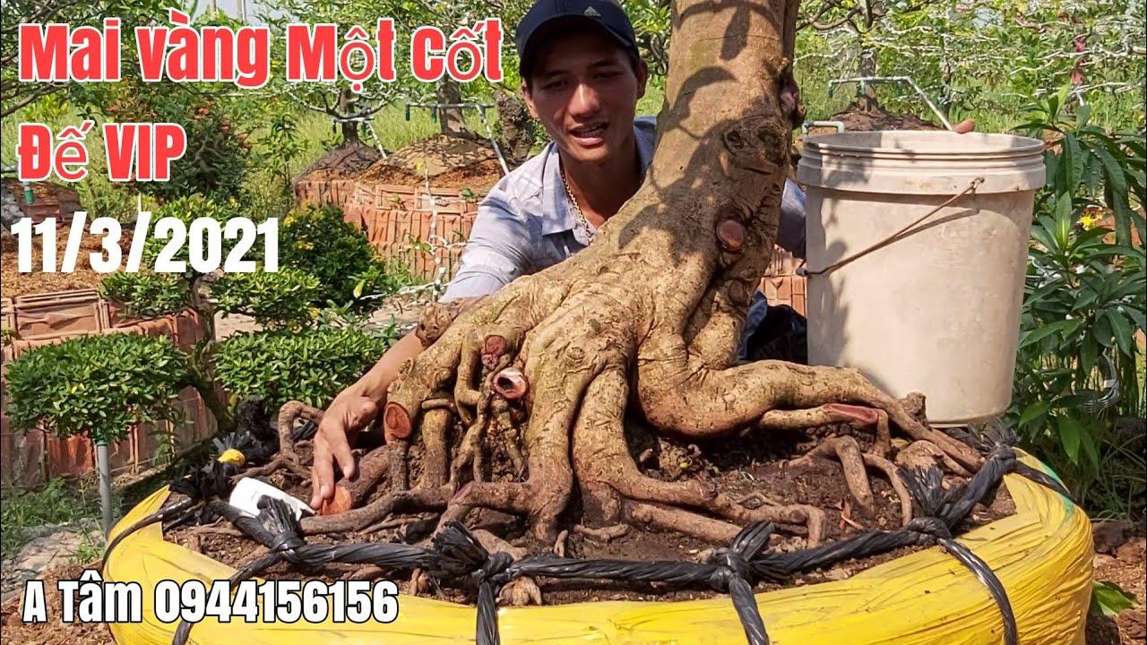 Mai tàng đế VIP //Mai dáng thú siêu đẹp gặp A Tâm 0944156156 Tháp Mười Đồng Tháp