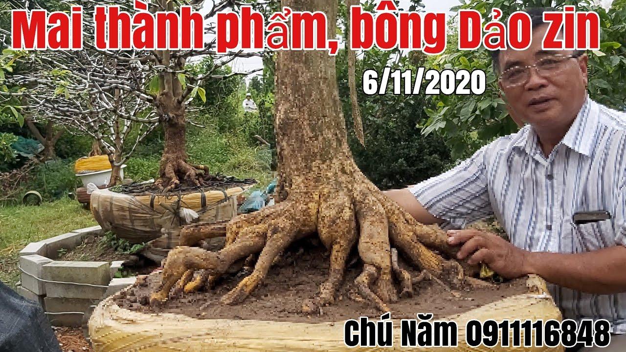 Mai tàng thành phẩm bông đẹp,Dảo Zin hữu nghị gặp Chú Năm 0911116848