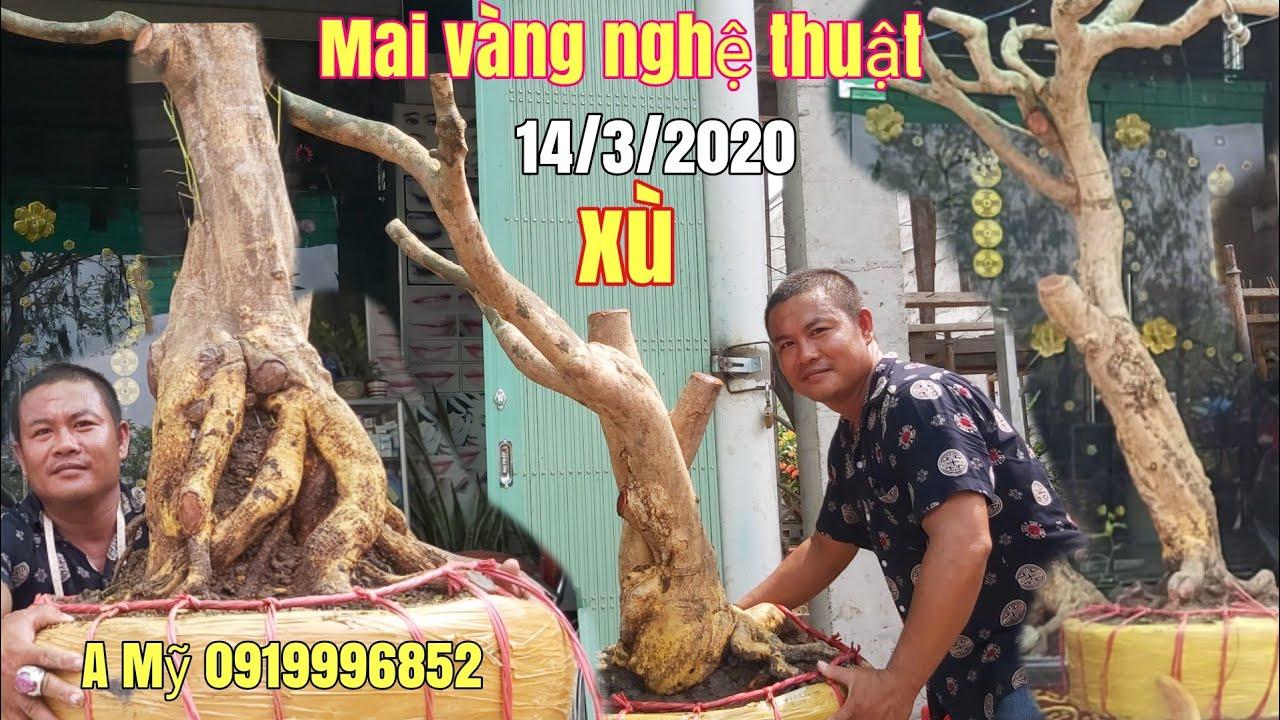 Mai vàng dáng nghệ thuật //Bonsai đế đẹp gặp A Mỹ 0919996852 Châu Phú AG
