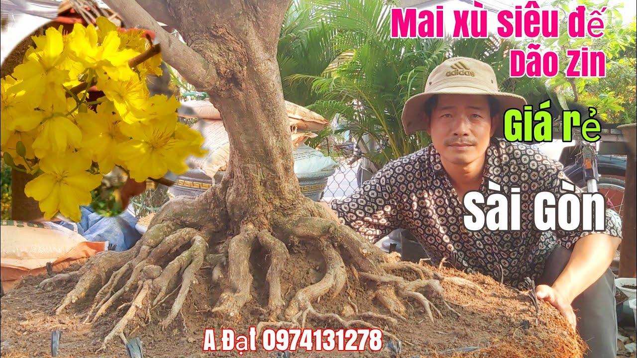 Mai xù siêu đế dão Zin bông đẹp giá rẻ gặp A Đạt 0974131278 Sài Gòn ngày 4/3/2020