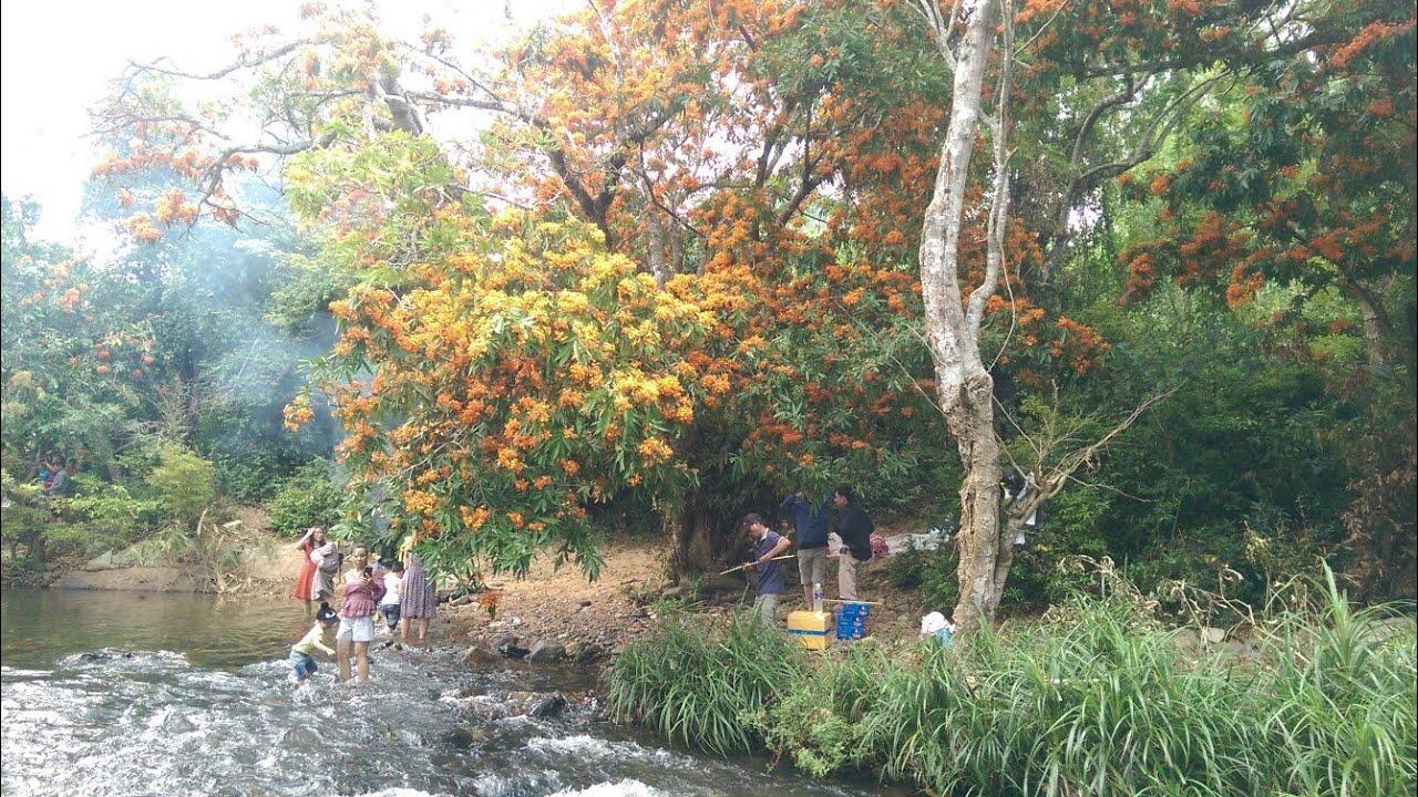 Một góc Suối Tà Má rực rỡ Trang Rừng