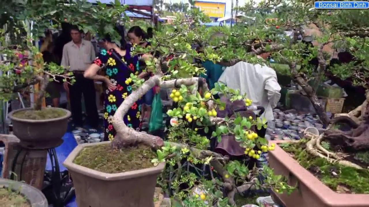 NHIỀU CÂY ĐẸP SIÊU SAO - Bonsai Binh Dinh