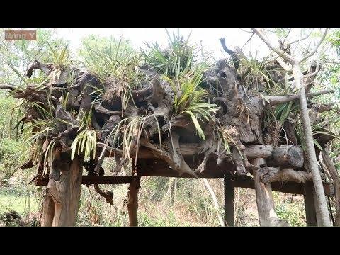 Ngôi nhà của kiếm - Đỉnh cao ghép gỗ