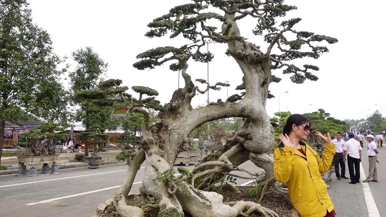 Những cây duối độc lạ và những cây sanh Nam Điền đẳng cấp - beautiful bonsai sanh and duoi