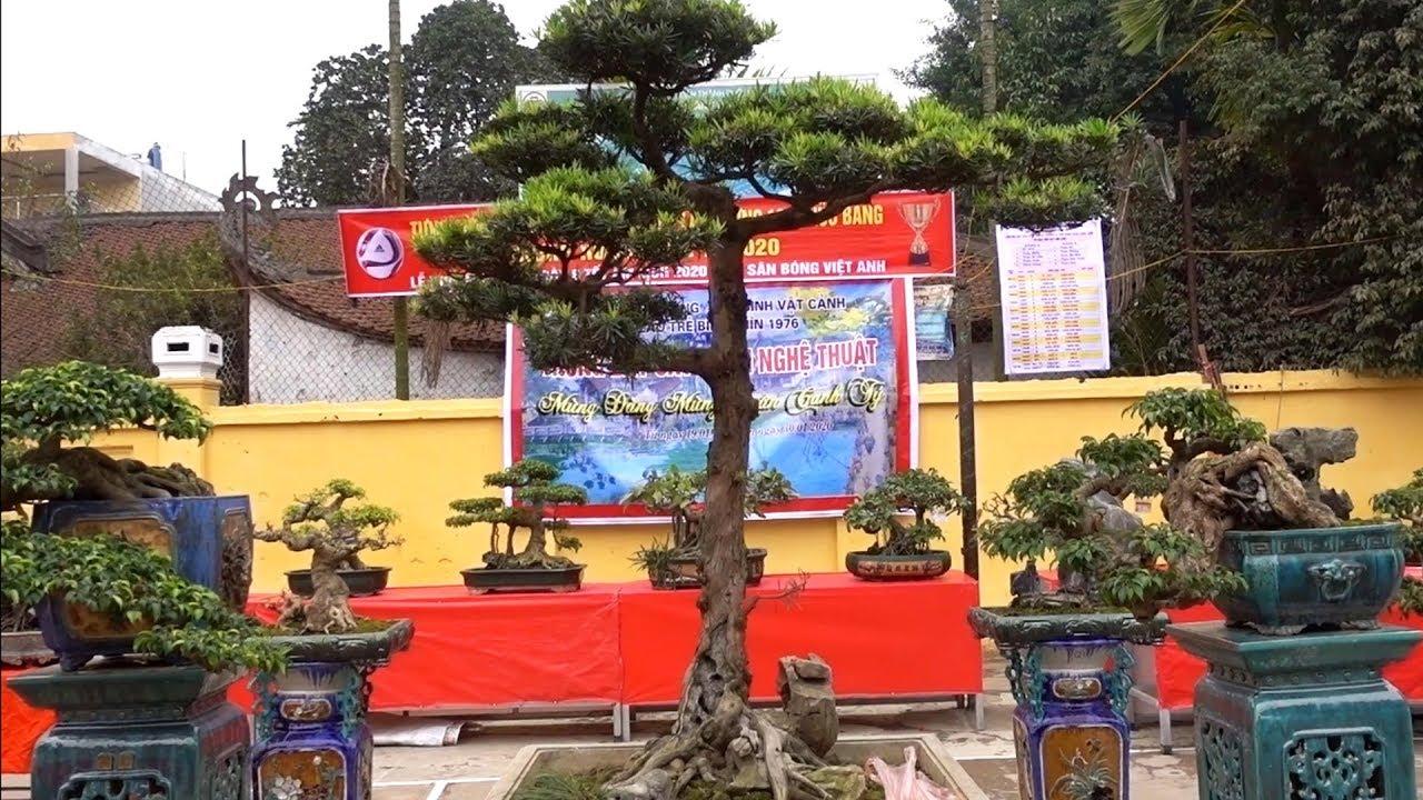 Những cây mịn và chất nhất triển lãm, sanh Nam Điền, tùng la hán đẹp. bonsai exhibition