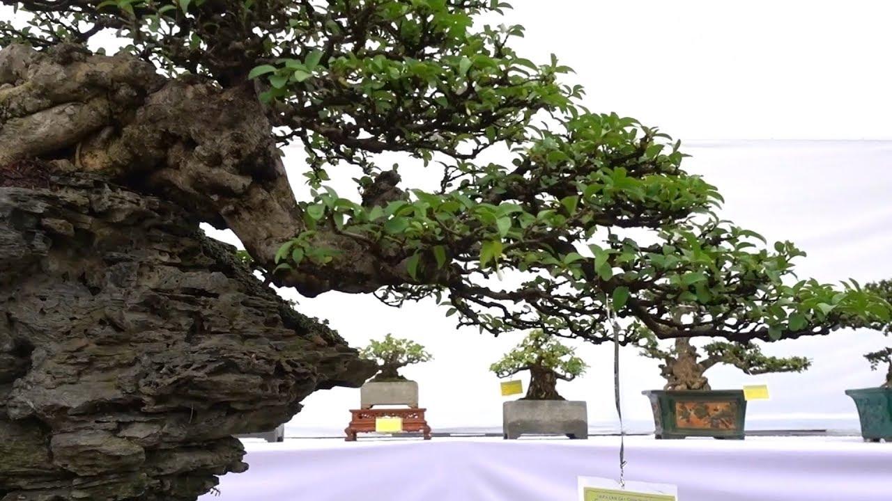 Những tiểu cảnh đẹp không tì vết, càng ngắm càng mê - beautiful small scene at bonsai exhibition