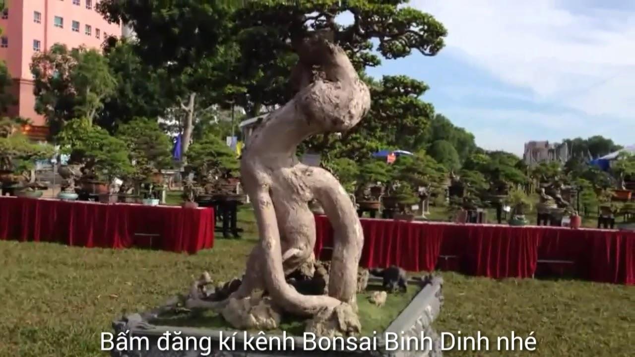 Nice works at the exhibition, Nhiều cây phôi đẹp - Bonsai Binh Dinh