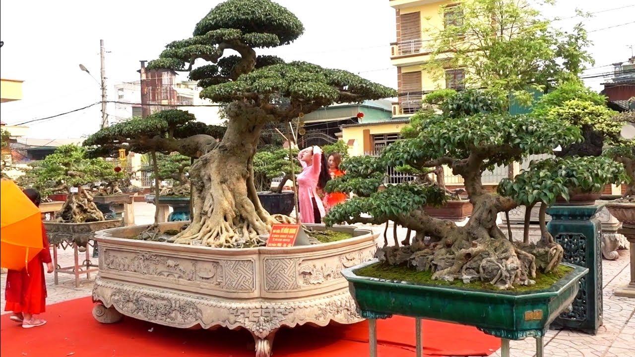 Phúc Đại Lộc và tác phẩm hơn 10 tỷ xôn xao cộng đồng mạng - beautiful bonsai trees