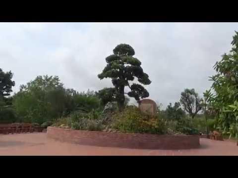 Rất nhiều cây bồ đề cổ thụ đẹp tại BẠCH ĐẰNG GIANG, Hải Phòng