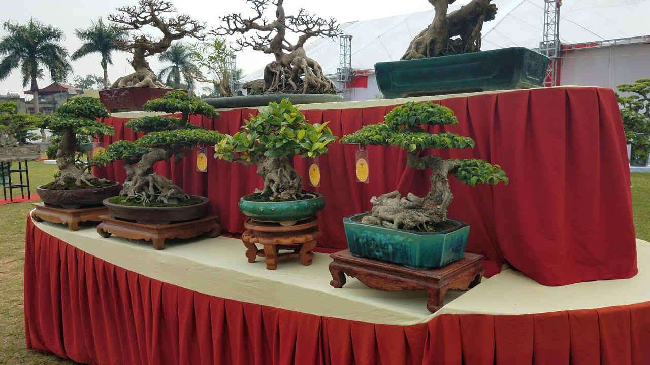 SH.1814.Bonsai mini cực đẹp tại triển lãm Đông Anh. Hà Nội.