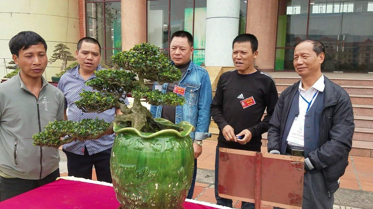 SH.2281.Nhiều người xúm đông lại bên cây Trà Phúc Kiến cực đẹp tại triển lãm Bắc Ninh