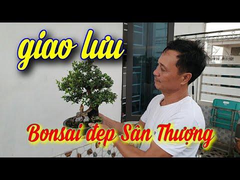 SH.4033. Độc đáo bonsai sân thượng đẹp Tuấn Lợi tp Thái Bình giao lưu với các bạn.