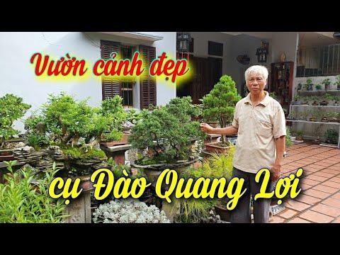 SH.4034. Thăm vườn cảnh đẹp cụ Đào Quang Lợi phường Kỳ Bá tp Thái Bình.