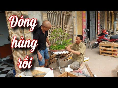 SH.4950. Anh Nguyễn Huynh Văn Giang Hưng Yên cứ đóng hàng đều đều cho khách sướng thật.