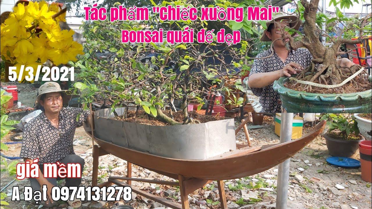 """Tác phẩm Mai vàng """"Xuồng Ba lá"""" dáng bay ,bonsai quái giá mềm gặp A Đạt 0974131278 Sài Gòn"""