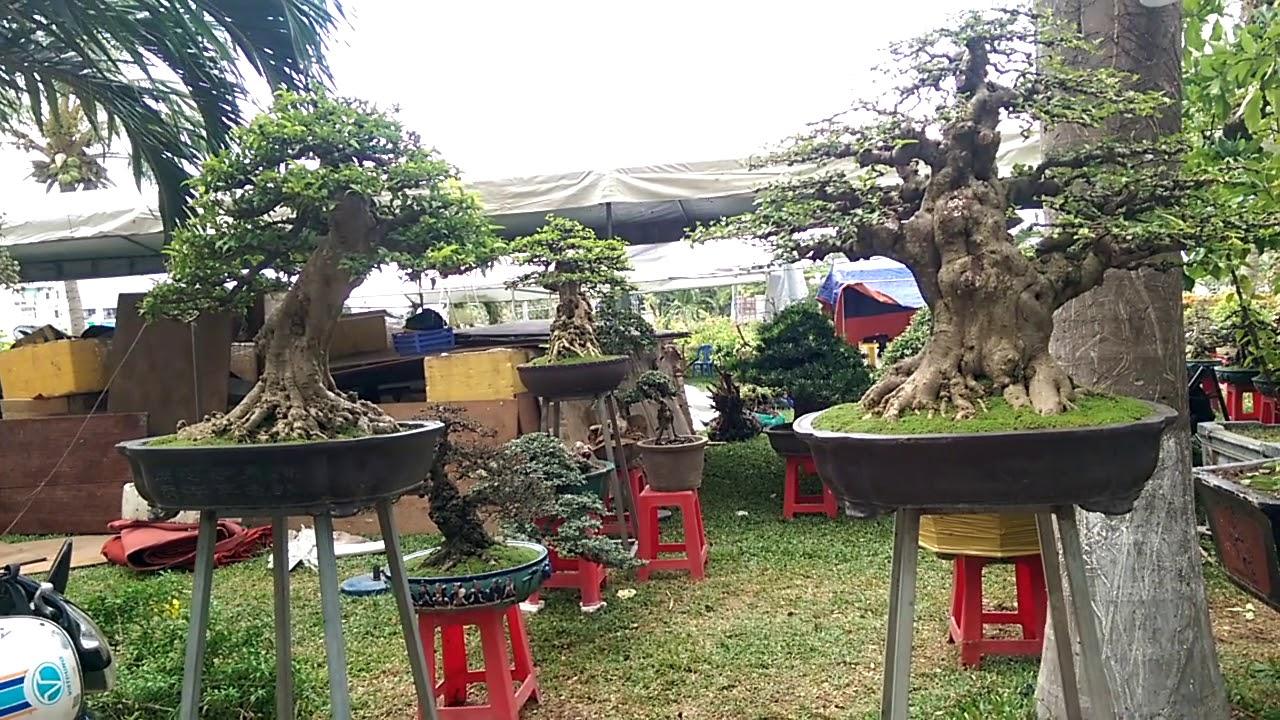 Tham quan xem những Tác phẩm Bonsai với rất nhiều cây đẹp tại Quy Nhơn 2019