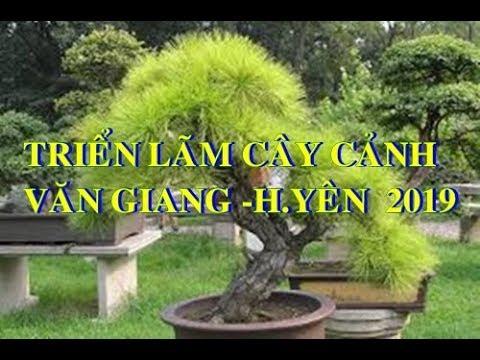 Triển lãm cây cảnh tại Văn Giang - Hưng Yên  2019