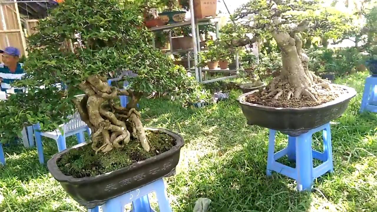 Triển lãm sinh vật cảnh An Nhơn Bình Định, Giang hàng nhiều cây đẹp-Bonsai Binh Dinh