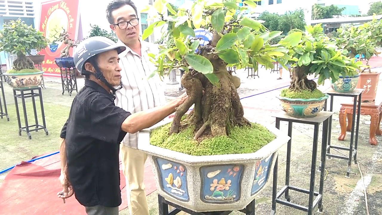 Tuyệt phẩm Mai Bonsai không xem phí - Bonsai Binh Dinh